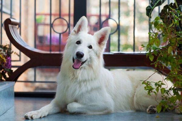 Cucciolo di cane sta sempre al balcone: scopriamo come mai
