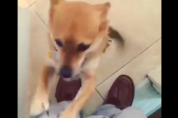 Cucciolo si fa trovare dietro la porta e fa la festa al suo padroncino (video)