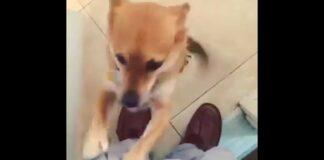 cucciolo porta festa video