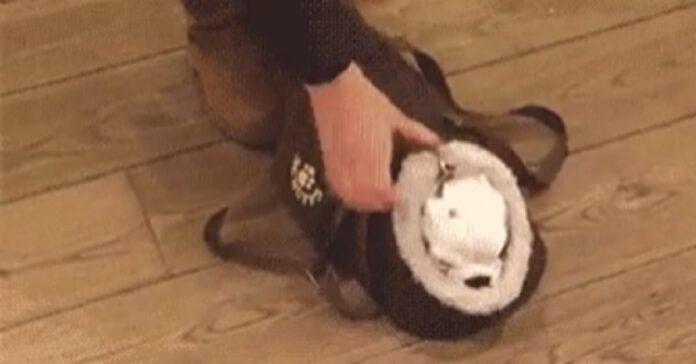 cucciolo borsa video
