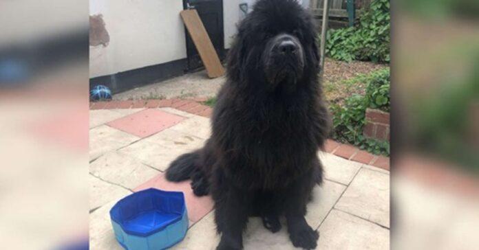 cane vicino a una piscina
