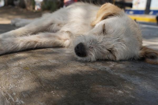 Il cagnolino fa di tutto per riuscire a raggiungere il proprietario arrestato (video)