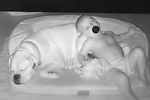 Il cane dorme nella cuccia e il bambino preferisce la sua compagnia al comodo letto (video)