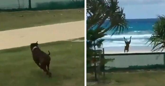 Cane che salta una recinzione