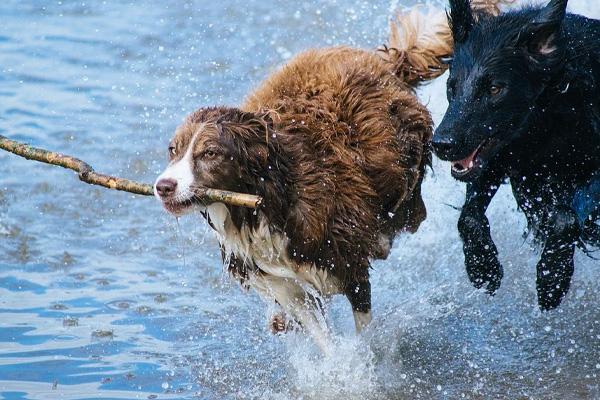 Il cane salta la recinzione per raggiungere la spiaggia ma non tutto va come previsto (video)