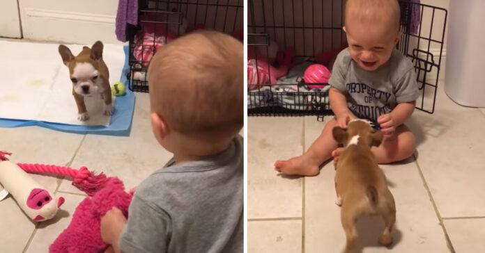 Cucciolo di Bulldog con un bambino