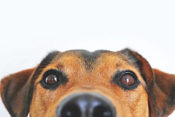 Il doloroso addio di Susanna Tamaro al suo cagnolino Lucky ha commosso il web