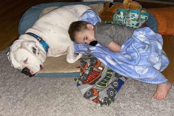 Il legame speciale e unico fra il Boxer Bruto e il piccolo Finn, il bambino della famiglia