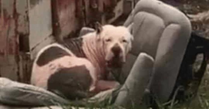 cane seduto su una sedia abbandonata