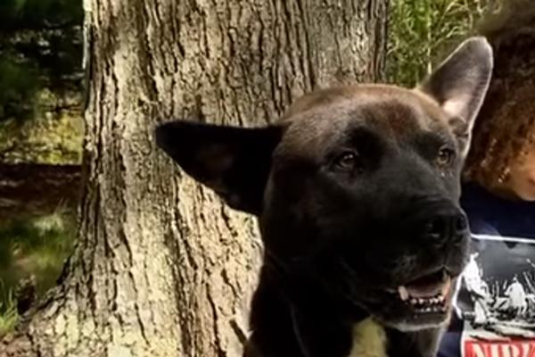 La seconda possibilità di Bear, il cane che dopo i maltrattamenti ha conosciuto l'amore (video)
