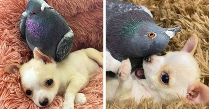 cane con un piccione