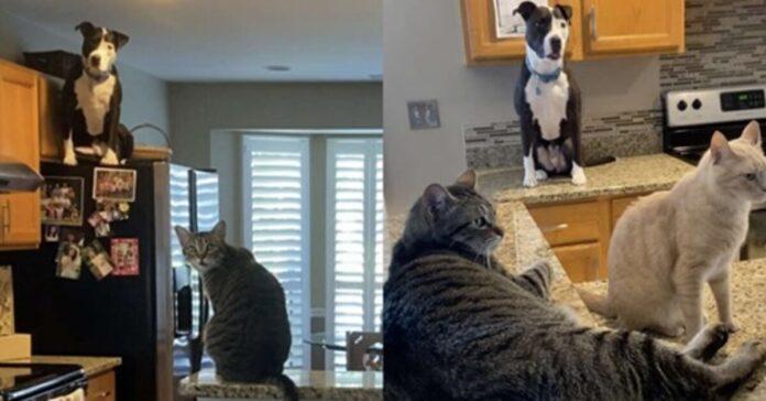 cane sul bancone della cucina