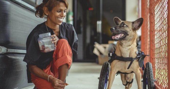 cagnolino su una sedia a rotelle
