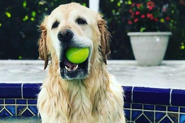 cane con pallina in bocca