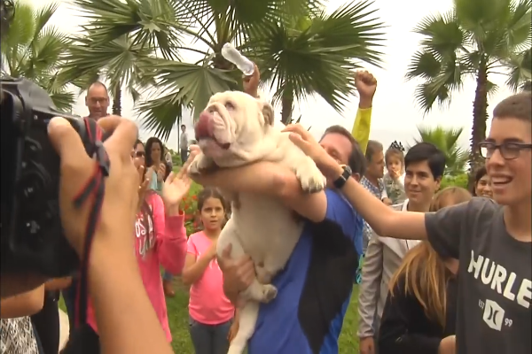 Otto il bulldog skater (VIDEO)