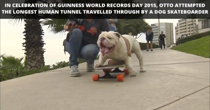 cane e skate