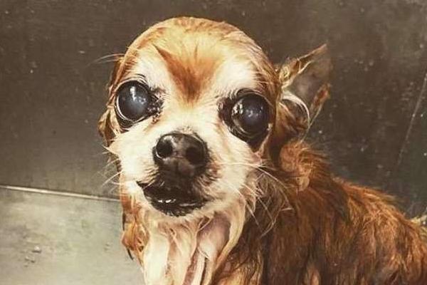 Pip, il cagnolino che non vuole mai fare il bagno e che inventa sempre nuovi capricci
