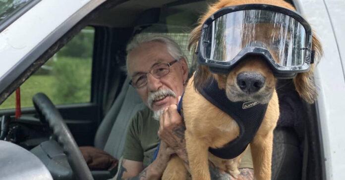 Cane in macchina con il proprietario
