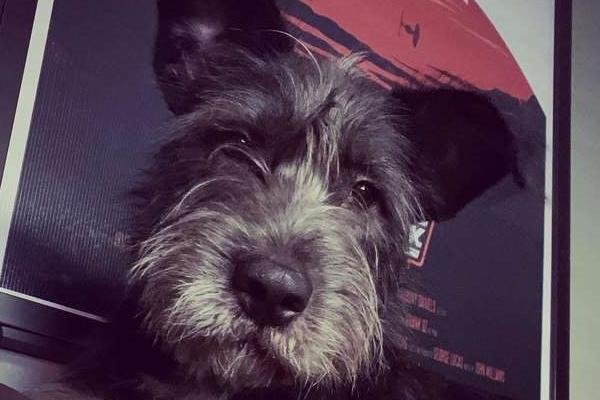 Rigby, il cagnolino che spunta fuori dalla cassetta postale