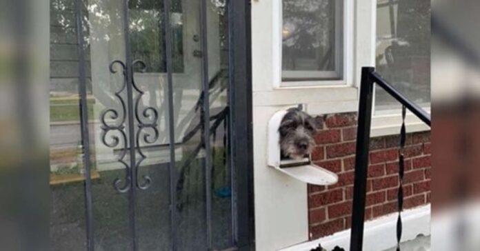 cagnolino con la testa fuori dalla cassetta postale