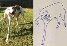 Stanley, il cagnolino che è diventato il protagonista dei disegni del suo padrone