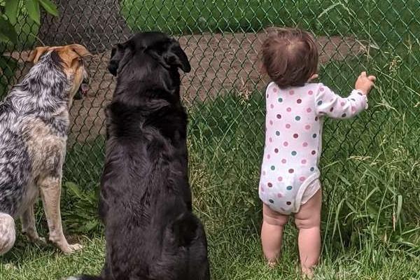 bambina con cani