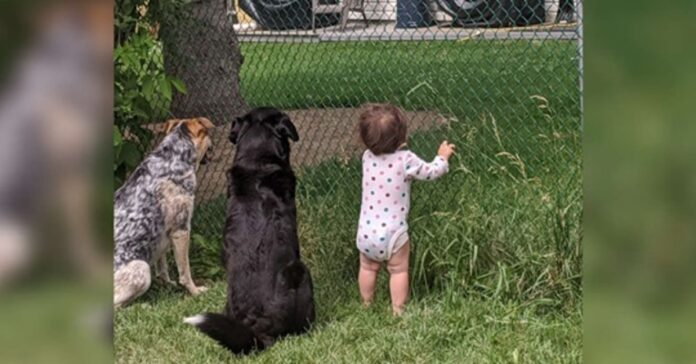 cani vicino ad una bambina