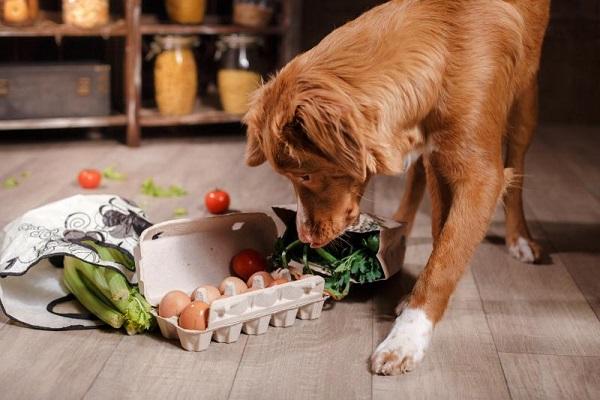 cane mangia fra i sacchi della spesa