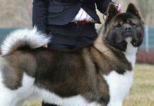 cane in compagnia del suo padrone
