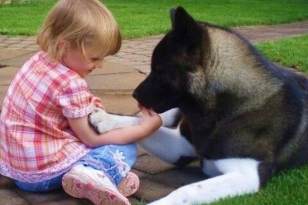 cani e bambini devono essere controllati da un adulto