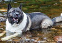 cane che adora l'acqua
