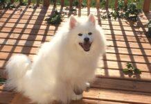 cane che prende il sole in balcone
