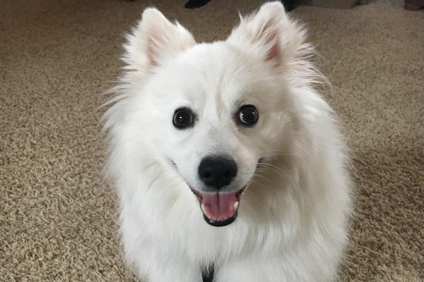 sguardo simpatico del cane