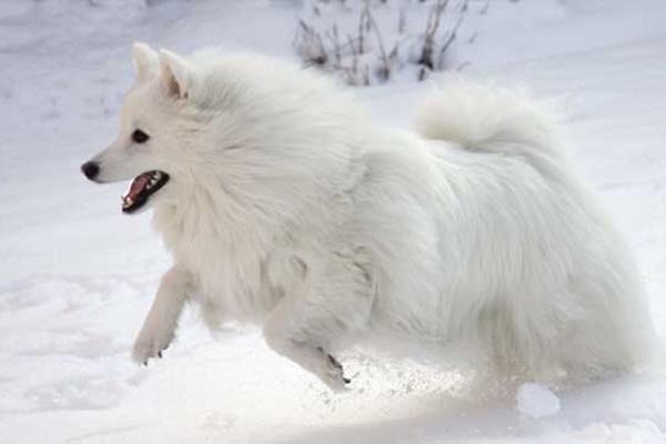 cane che corre tra la neve