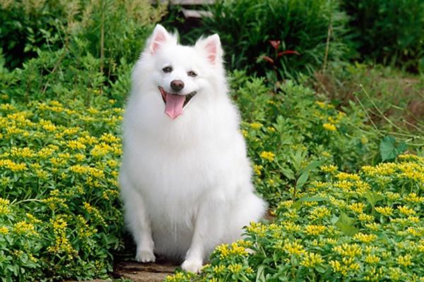 cane bianco in un campo di fiori