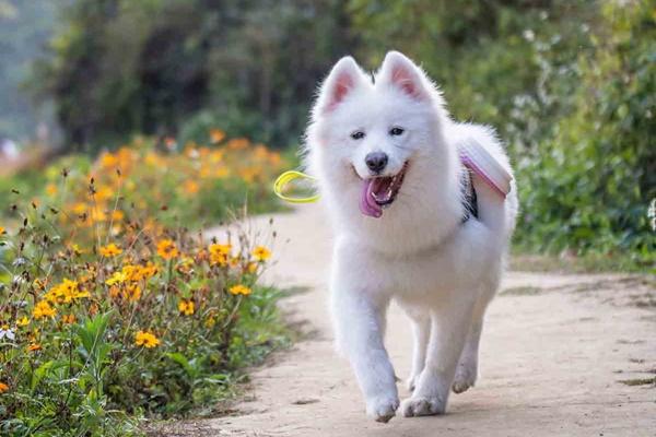 cane che fa una passeggiata all'aria aperta