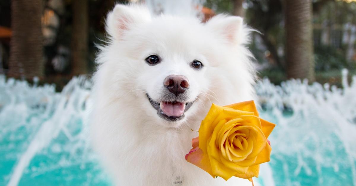 cane bianco con un fiore giallo