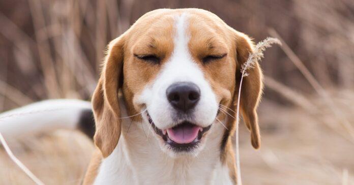 cane che sorride felice