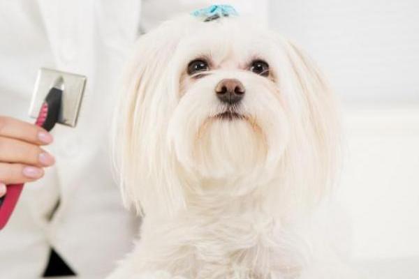Bagno d'estate al cane: quando e come farglielo, senza stress o rischi