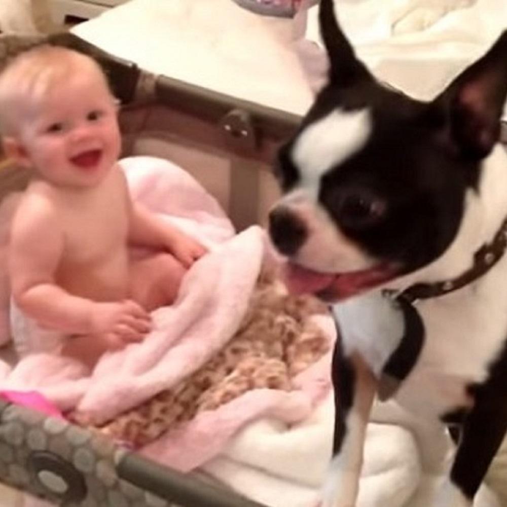 humphrey cucciolo gioca bimba