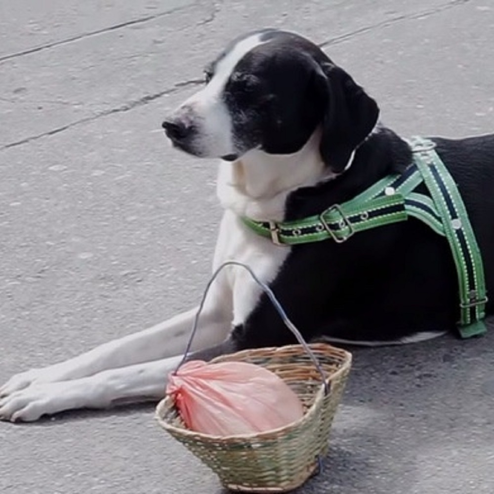 Niño cagnolino legame speciale proprietario