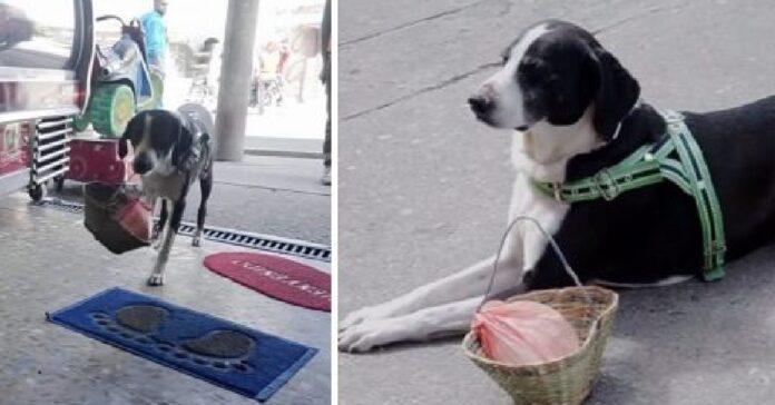cane aiuta proprietario spesa modo originale