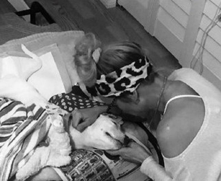 Cane completamente paralizzato si salva grazie all'amore (VIDEO)