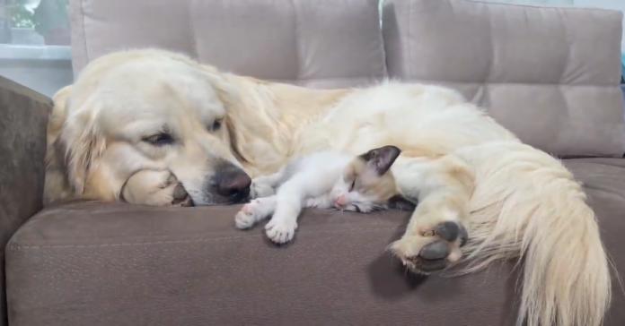 animali sul divano
