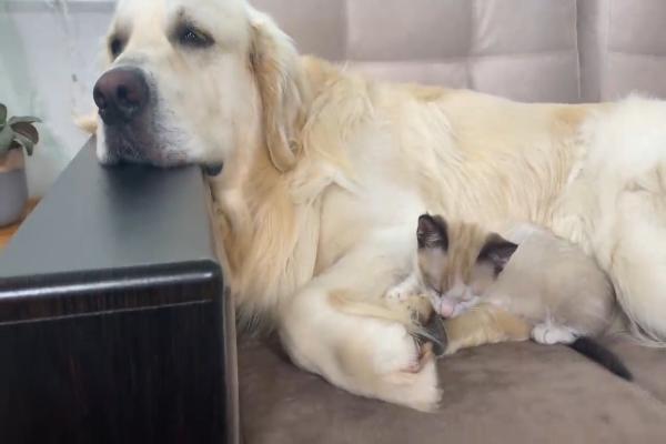 Cane e gattino dormono insieme per la prima volta: la nanna è tenerissima (VIDEO)