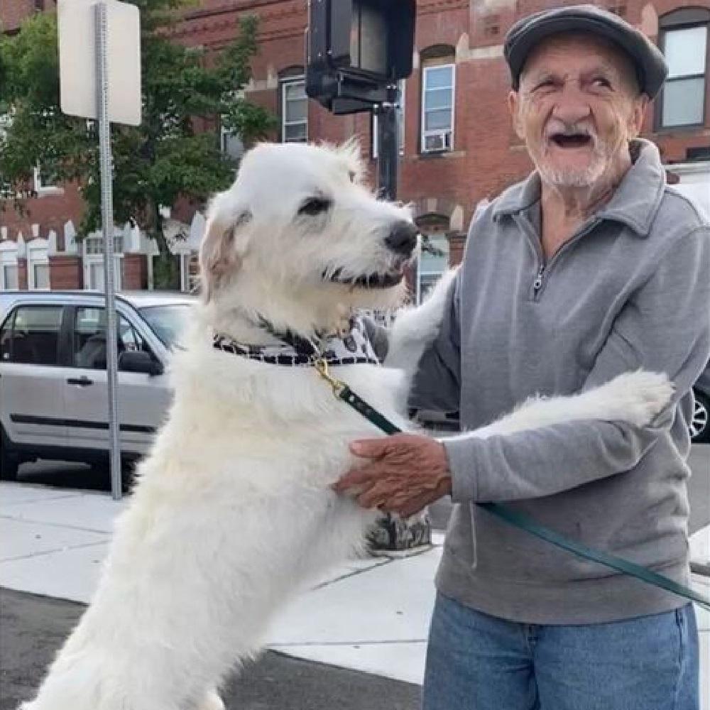 Cane labradoodle mostra la sua gioia nel rivedere il vicino di casa (VIDEO)