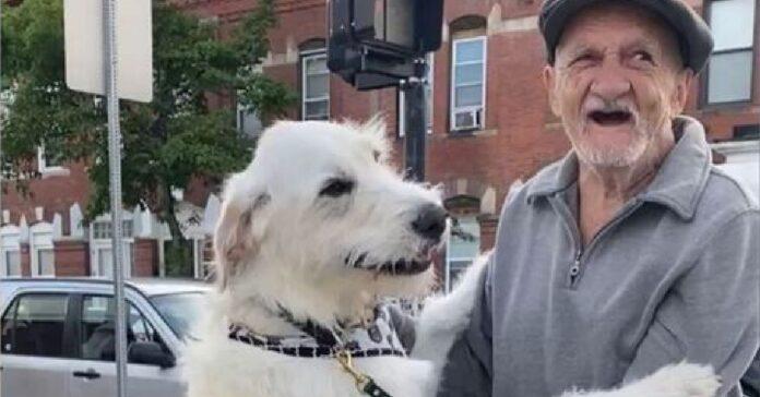 cane labradoodle mostra gioia nel rivedere caro amico