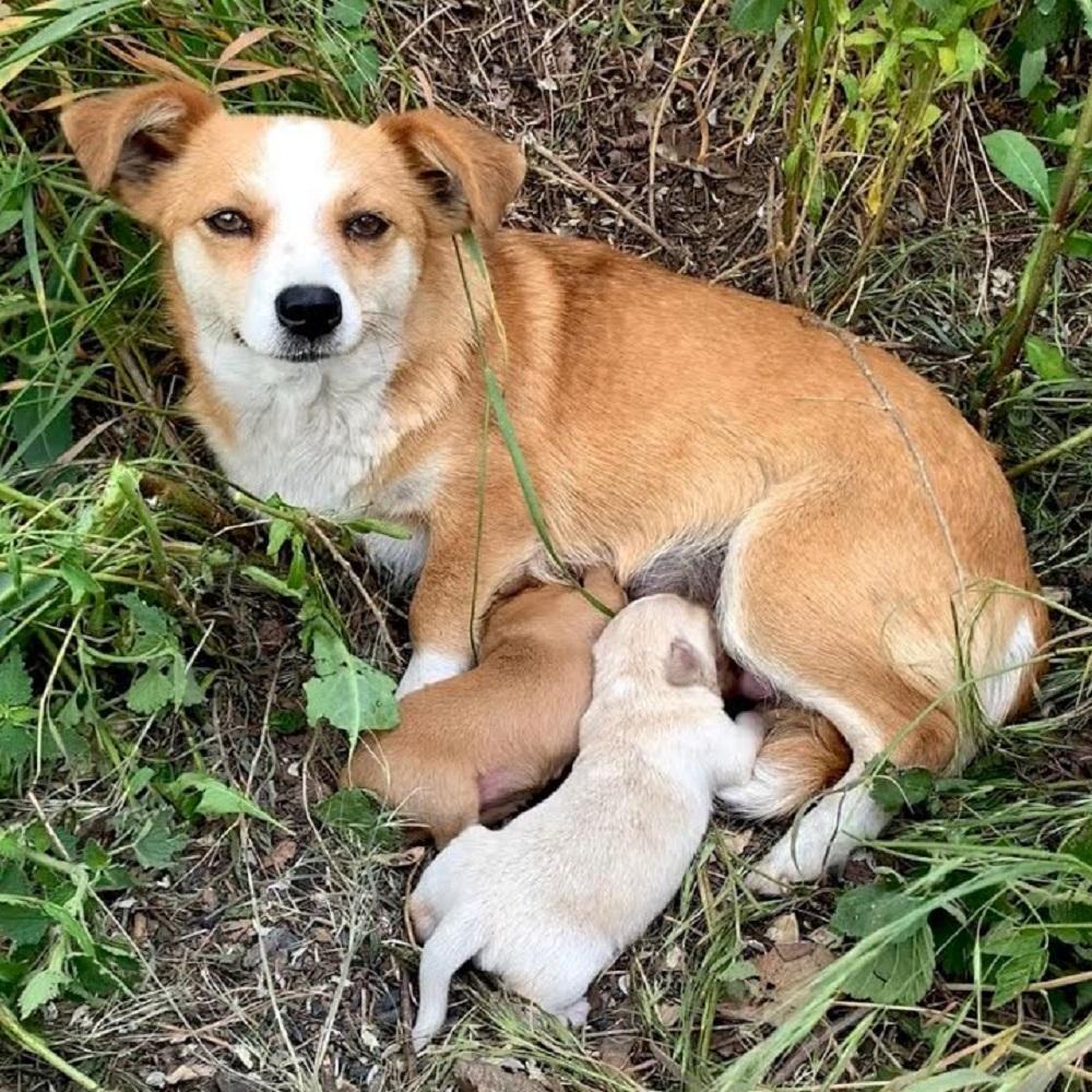 Cane partorisce ma viene abbandonato dai crudeli proprietari (VIDEO)