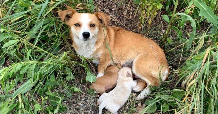 cane partorisce ma viene abbandonato da proprietari