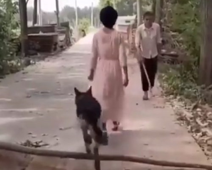 cane pastore tedesco passeggiata proprietaria